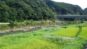 厳木川下流