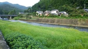 厳木川上流