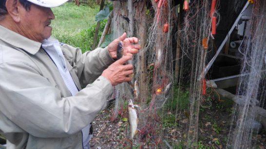 くま川おとり鮎店 刺網漁
