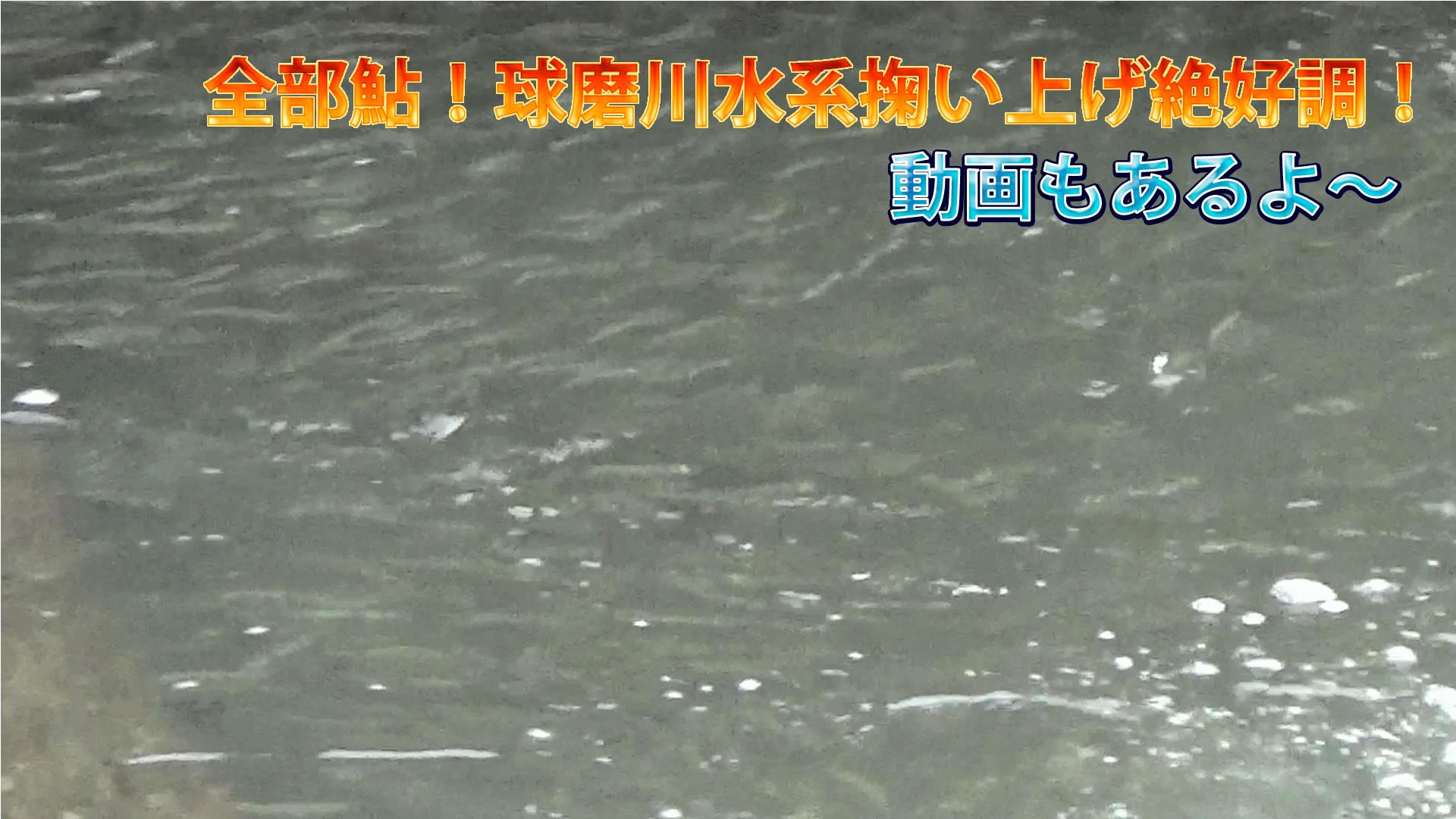 球磨川水系掬い上げ絶好調!