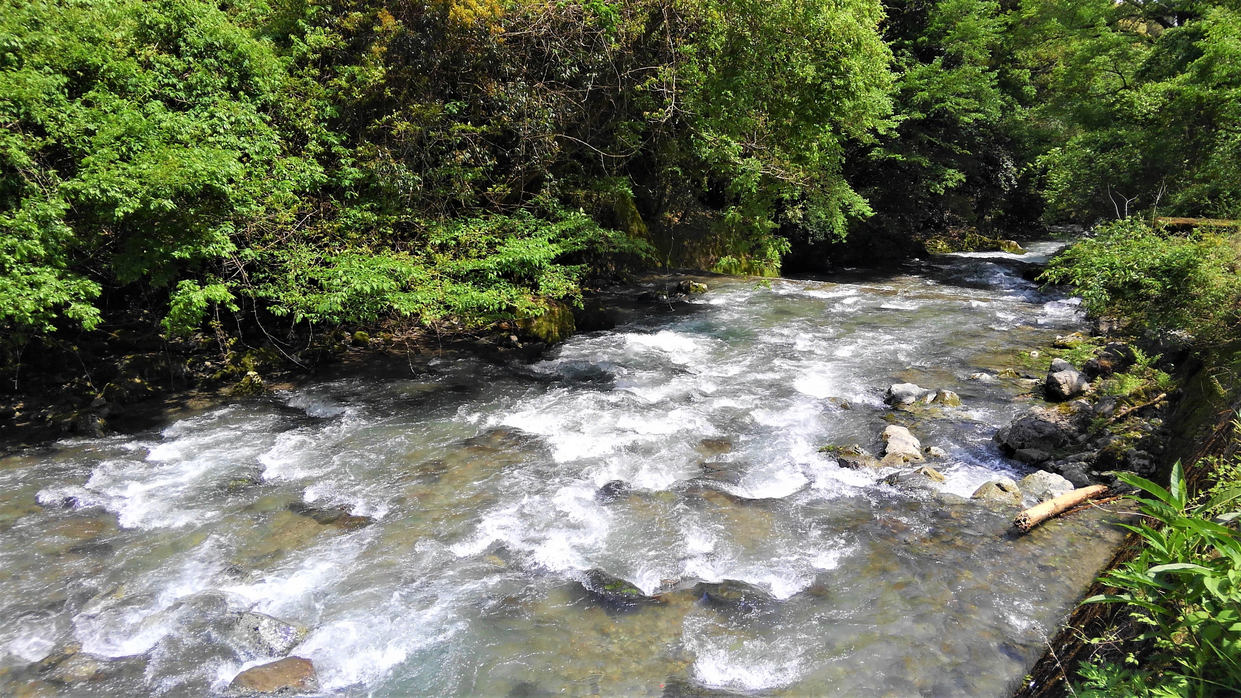 増水後の支流