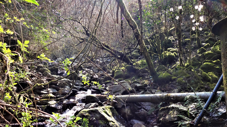 白髪岳からあさぎり町方面へ流れる川の源流