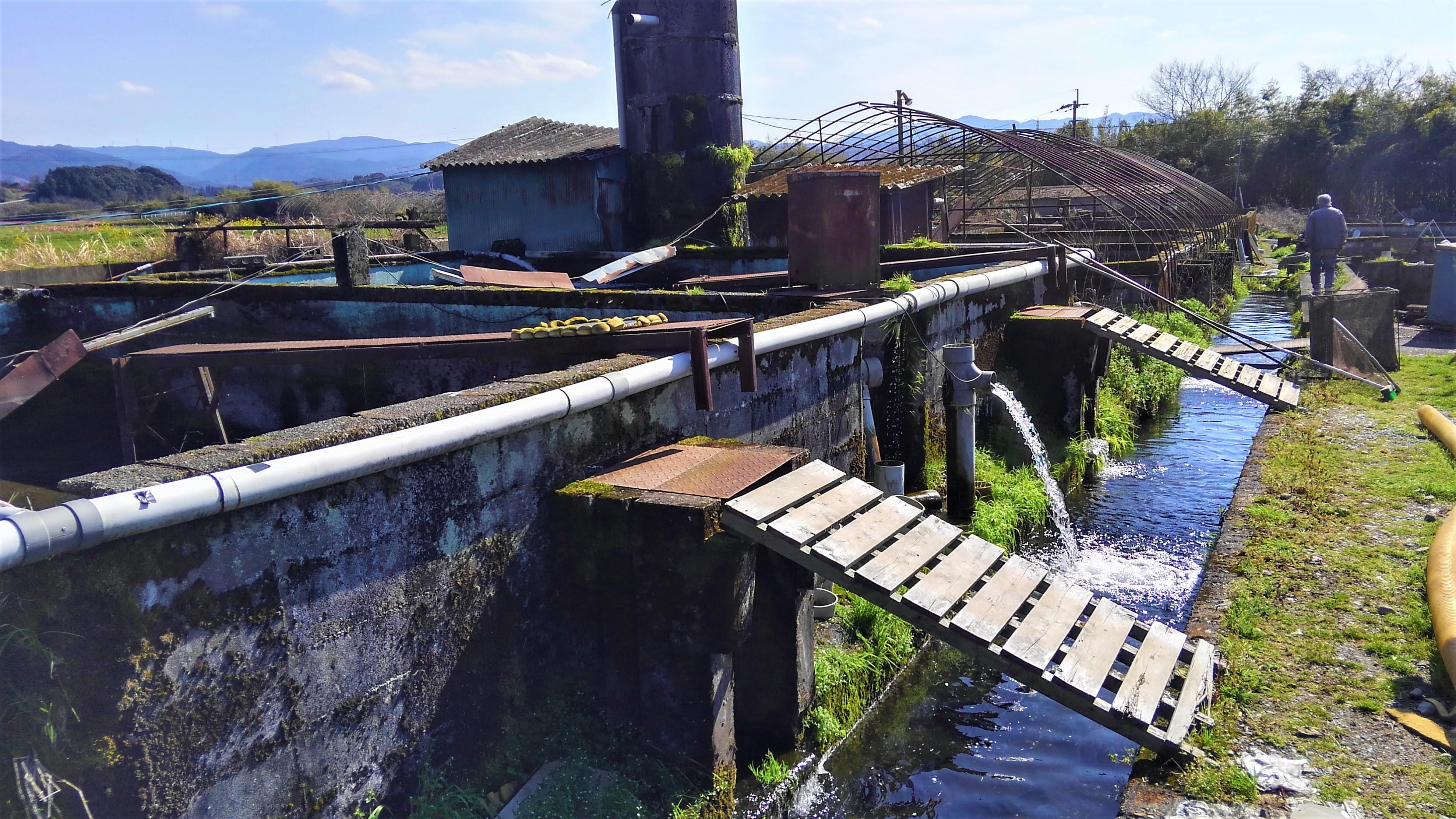 生駒水産 養殖場