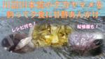 川辺川本流夕方ヤマメTI