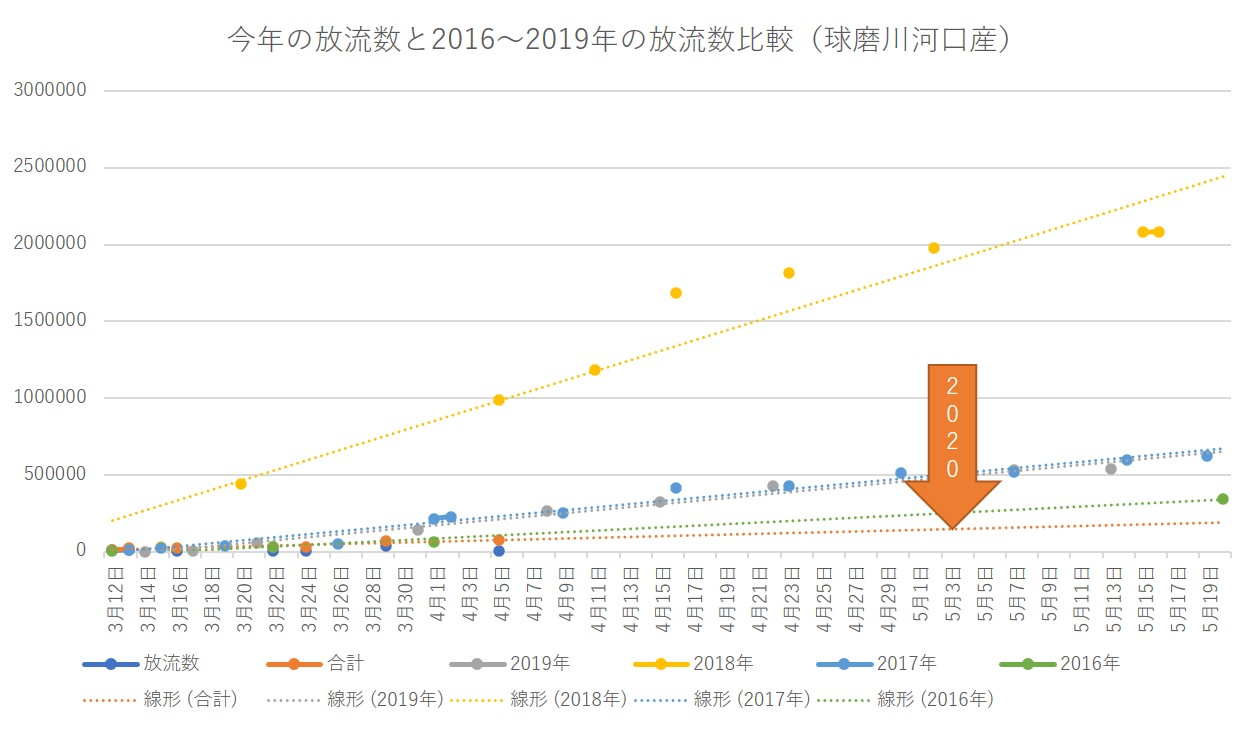 今年の放流数と2016~2019年の放流数比較(球磨川河口産)20200409